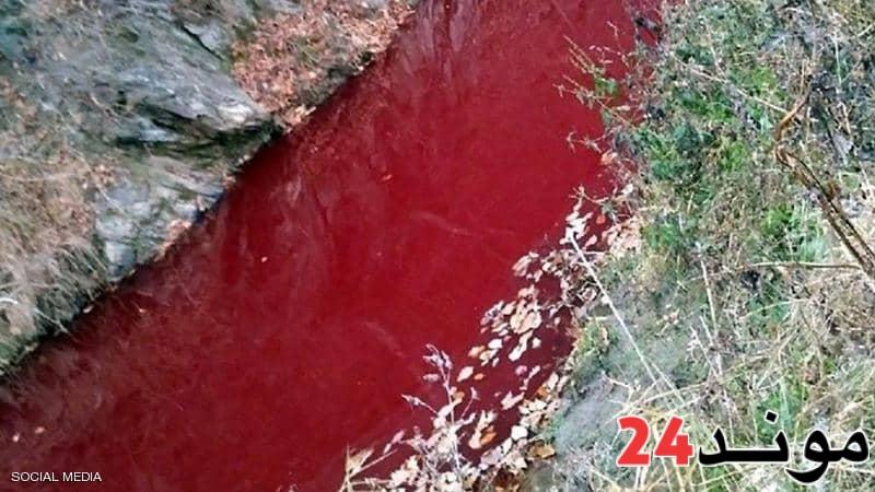 بسبب الخنازير تحول لون نهر يقع على الحدود بين الكوريتين إلى الأحمر